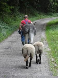 Hendrik met Ezel en schapen