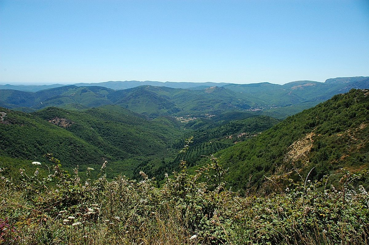 Natuur in een bosrijke omgeving